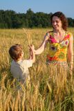 Mother gives ears in wheaten field to child Royalty Free Stock Photography