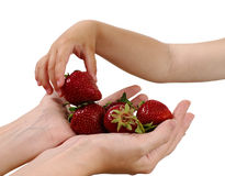 Mother gives handful strawberries Royalty Free Stock Photography
