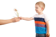 Mother gives toddle boy giant dandelion. isolated on white. Mother gives blondy boy giant dandelion. isolated on white Royalty Free Stock Image