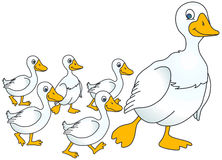 Mother goose and baby geese Royalty Free Stock Photos