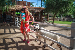 Mother helping a daughter Feeding Farm Animals. Mother helping a daughter Feeding Asia Farm Animals stock image