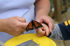 Mother helping put a butterfly on child Stock Images