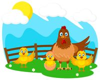 Mother hen and baby Chicks on the green lawn. Farm royalty free illustration