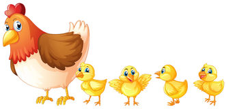 Mother hen and four chicks Stock Image