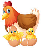 Mother hen and two chicks in eggs Stock Photos