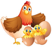 Mother hen and two chicks. Illustration Stock Images