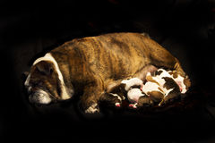 Mother and her babies Royalty Free Stock Images