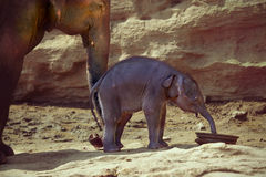 Mother and her baby elephant Stock Photo
