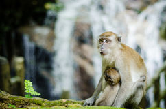 Mother and her baby. A mother monkey resting with her baby Royalty Free Stock Photo