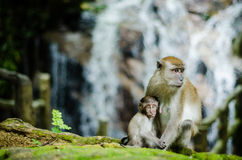 Mother and her baby. A mother monkey resting with her baby hugging Stock Photo