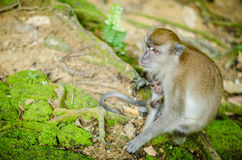 Mother and her baby. A mother monkey resting with her baby hugging Stock Images