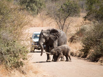 Moooom!. Mother and her Baby at Pilanesberg stock images