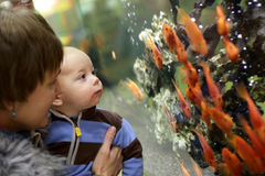Mother and her baby watching the gold fishes Royalty Free Stock Photos
