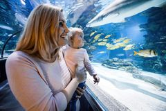 Mother and her child watching sea life. In oceanarium Stock Photos