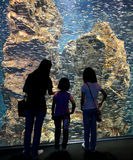 A Mother and Her Children Looking at Silver Fish in A Giant Aquarium Royalty Free Stock Photo
