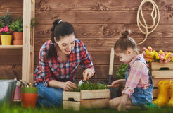 Mother and her daughter engaged in gardening royalty free stock photos
