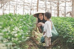Mother and her daughter farming in the farm together. Portrait of mother and her daughter farming in the farm together Stock Photography