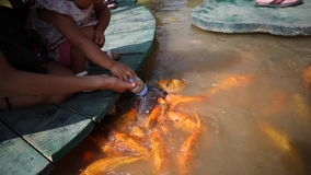 Mother and her daughter are feeding the koi fish in pond by milk bottle stock video footage