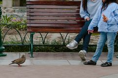 Mother and her little daughter sitting on a bench looking at a pigeon royalty free stock images
