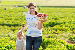 Mother and her little kid child on organic strawberry farm Stock Photo