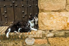 Family of Cats - Ronda. A mother and her newly born kittens - Ronda royalty free stock photos