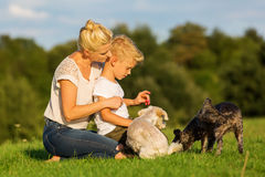 Mother with her son playing with two small dog Royalty Free Stock Photography