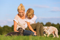 Mother with her son playing with two small dog Stock Image
