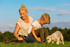 Mother with her son playing with two small dog Royalty Free Stock Images