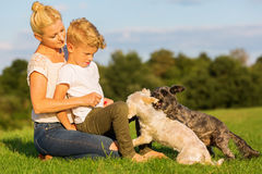 Mother with her son playing with two small dog Stock Photo