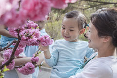 Mother holding daughter and looking at cherry blossoms. Royalty Free Stock Photography