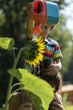 Mother holding her toddler on shoulders as he waters sunflower Stock Images