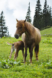 Mother horse feeding baby horse Stock Photo