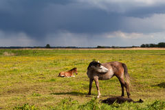 Mother horse and foal on pasture Stock Photo