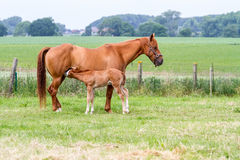 Mother horse whit baby royalty free stock photos