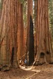 Mother with infant visit Sequoia national park in California, USA.  stock photo