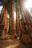 Mother with infant visit Sequoia national park in California, USA.  stock image