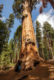 Mother with infant visit Sequoia national park in California, USA.  stock images