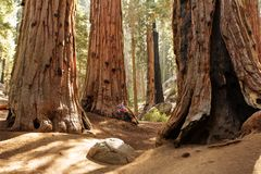 Mother with infant visit Sequoia national park in California, USA. / royalty free stock image