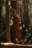 Mother with infant visit Sequoia national park in California, USA. / stock images