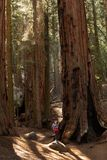 Mother with infant visit Sequoia national park in California, USA.  royalty free stock images