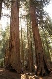 Mother with infant visit Sequoia national park in California, USA.  royalty free stock photo