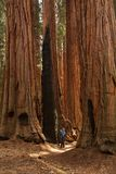 Mother with infant visit Sequoia national park in California, USA.  stock photos