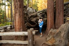 Mother with infant visit Sequoia national park in California, US Royalty Free Stock Images