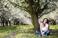 Mother with kids in cherry blossom garden Stock Images