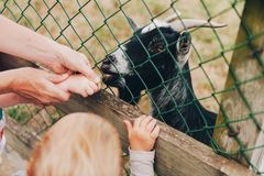 Mother with kids feeding goat. In the zoo Stock Image