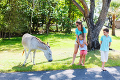 Mother and kids outdoors looking at donkeys Stock Image