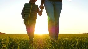 A mother and a little boy run through the green grass, holding hands. Happy family at sunset. Close up.