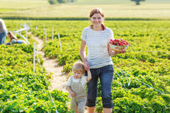 Mother and little boy of 2 years on organic strawberry farm in s Royalty Free Stock Images