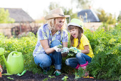 Mother and little girl planting strawberry Stock Photos