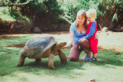 Mother and little son feeding giant turtle Royalty Free Stock Images